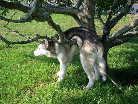 15 забавных собак, которые у…