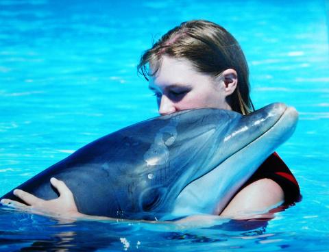 19 февраля Всемирный день защиты морских млекопитающих (День кита). Дельфины взрываются на пляже!