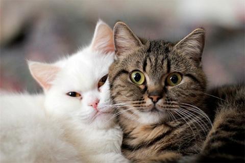 Самые-самые: Знаменитые коты кинематографа встретились в одном видео
