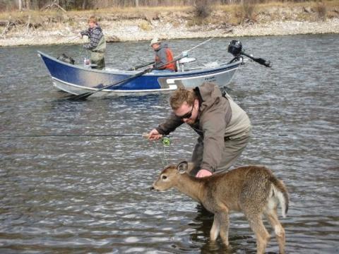 Внезапный гость для рыбаков (5 фото)