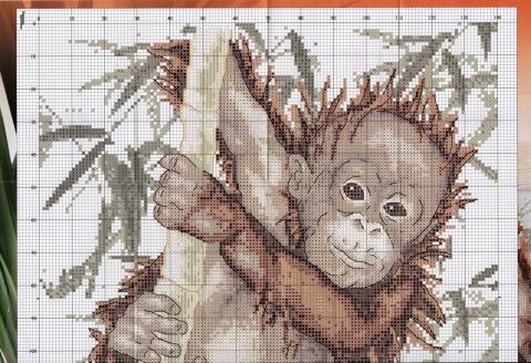 Маленькая шимпанзе