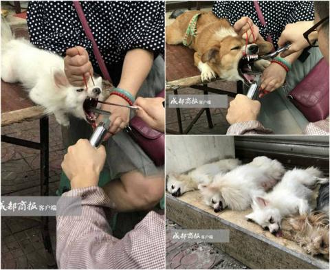 Ветеринар-нелегал развернул …