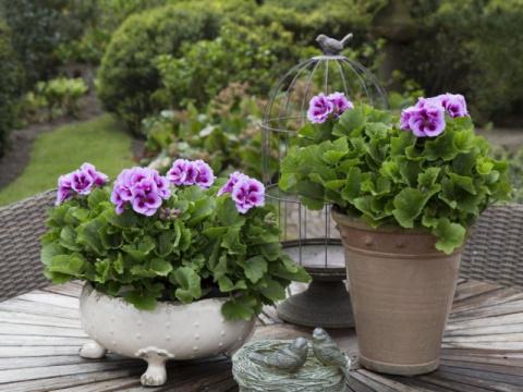 4 аристократа для королевских цветников