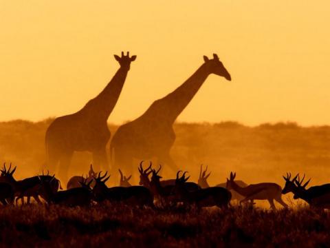 Лучшие фотографии от National Geographic в июле.