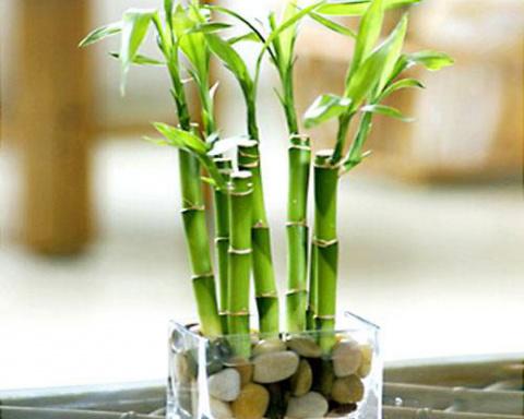 Бамбуковая отделка интерьеров