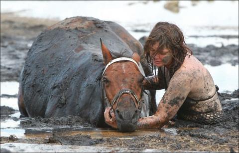 Драма на пляже: спасение лошади. Как животные приспособились использовать наш мусор.