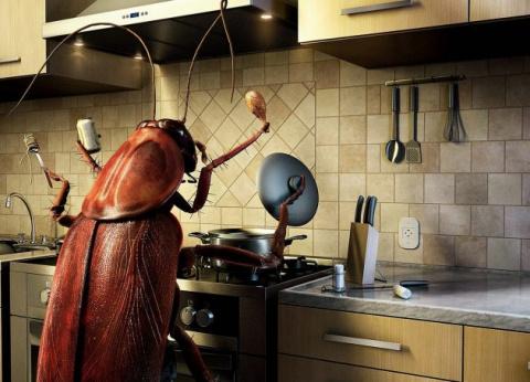 Как избавиться от тараканов …
