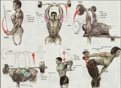 Как накачать определенные группы мышц подробная схема!