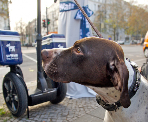 Немецкие рекламщики пиарятся за счет собачьих экскрементов