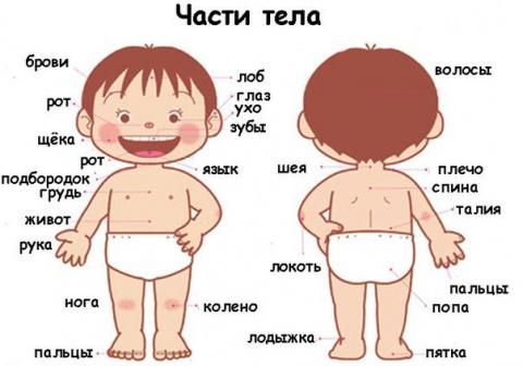 Детский мир. Загадки про части тела