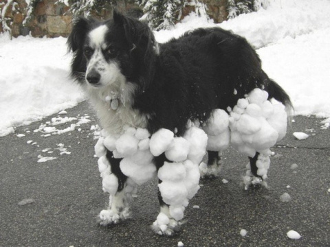 Смешные собаки, которые любят придуриваться