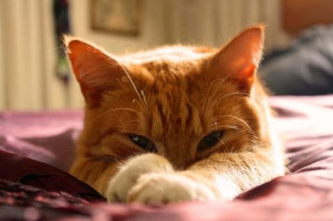 С таким котом не пропадёшь!