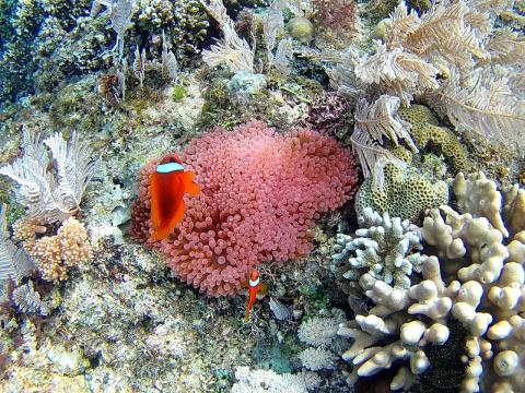 Все красоты подводного мира.…
