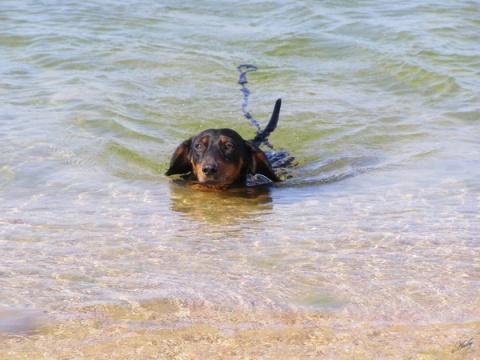 В Ейске туристы потеряли собаку с драгоценностями на миллион рублей