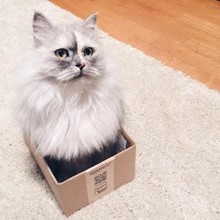 Невероятная кошка Алиса с ше…