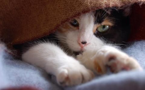 Кошка постоянно трясет ушами…