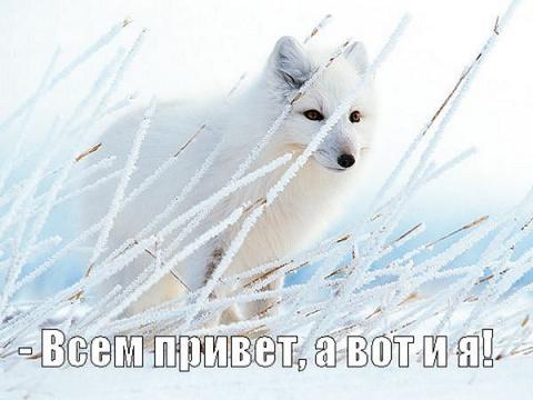 О запланированном визите белого северного лиса в Киев