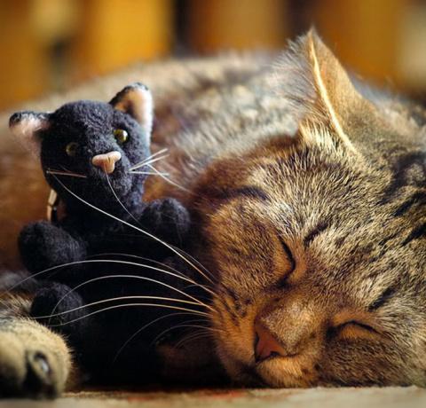 Позитивные котейки