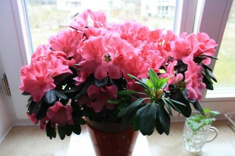 Комнатные растения, цветущие зимой