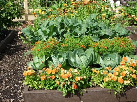 Таблица как спланировать смешанные посадки овощей.