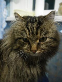 История кота Василия из одно…