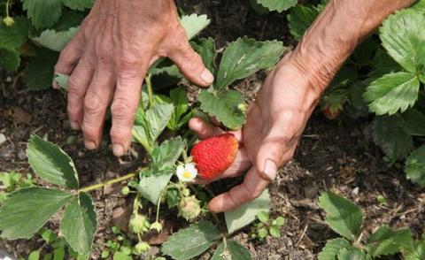 8 самых распространенных ошибок садоводов