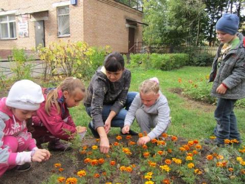 Собираем семена цветов-однолетников
