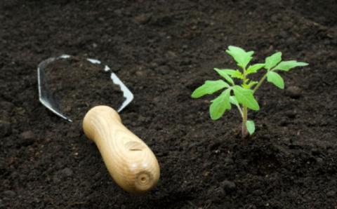 Как тяжелые бедные почвы сделать рыхлыми и плодородными