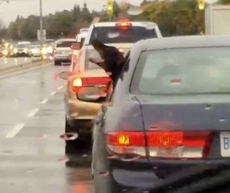 Пёс в восторге от дождя и ртом хватает капли на лету