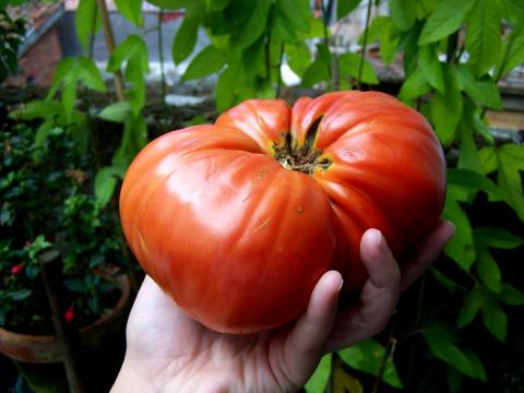 Выращиваю овощи без химии более 60 лет
