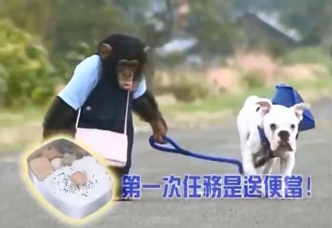 Забавные истории обезьянки Funny и бульдога (видео)