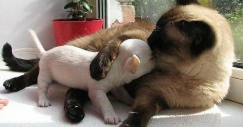 Они могут стать лучшими друзьями. И даже больше, чем друзьями!  20 котов, которые по уши втрескались в собак