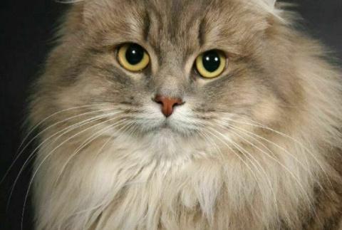 Кошка как индикатор вашей кармы