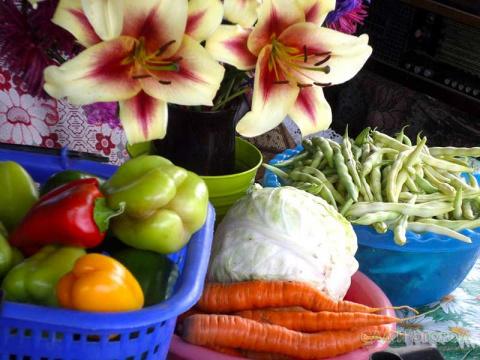«Вредные» советы огородникам и садоводам! Как хранить клубни георгинов (парафинирование)