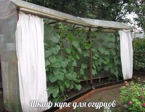 """Классная придумка """"Шкаф -купе для огурцов"""""""