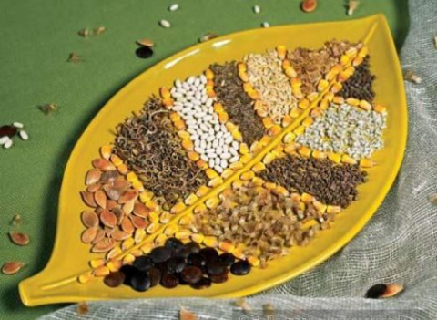 Срок годности семян: нужно л…