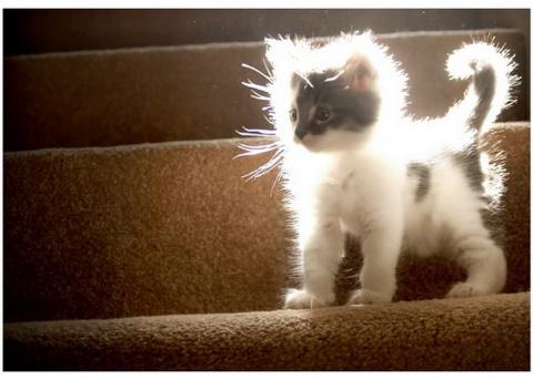 Как научить кота ходить по лестнице?