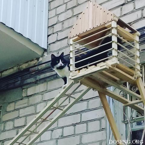 Парадный вход для кошки