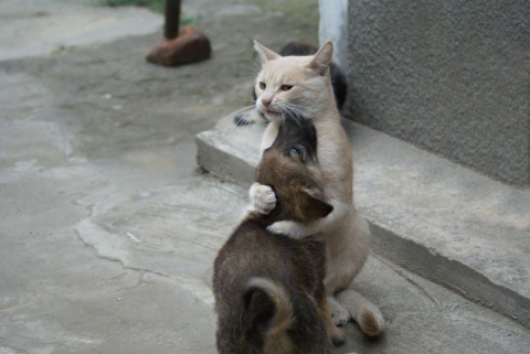 Кошка с человеческим сердцем…