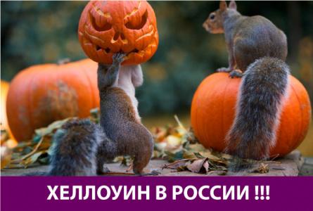 Белки и хеллоуин