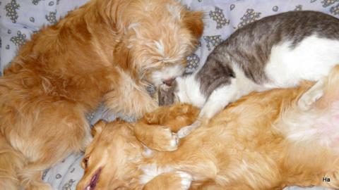 треугольник собачо-котячий