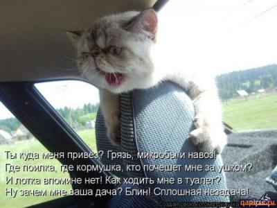 В деревню, к тётке, в глушь, в Саратов!)