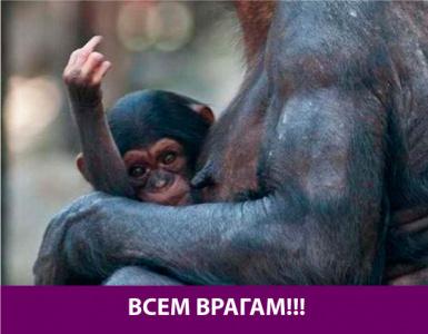 Маленькая обезьянка просто показала жест
