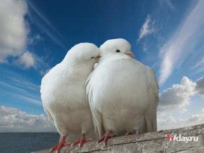 голубки