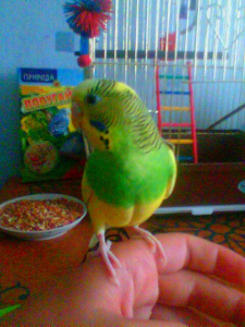 Моя птичка Леха