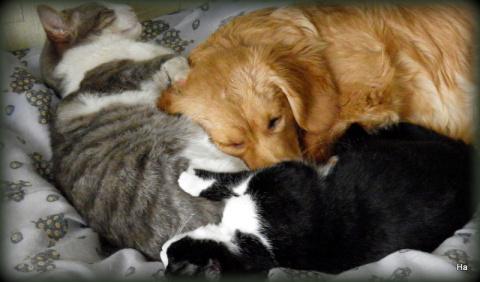 котячо-собачий треугольник