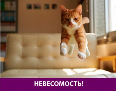 Котик прикольно прыгает