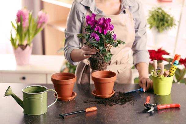 Картинки по запросу Благодаря этому трюку комнатные растения будут активнее расти и намного сильнее цвести!