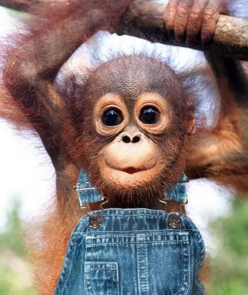Детей ретро, картинки обезьянок прикольные смешные