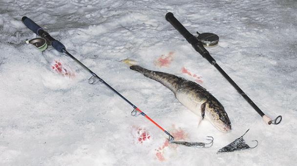 Ловля зимой на каркалыгу